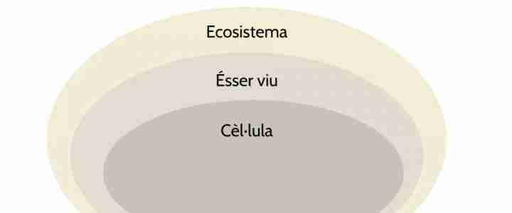 Idees clau del model de sistemes vius