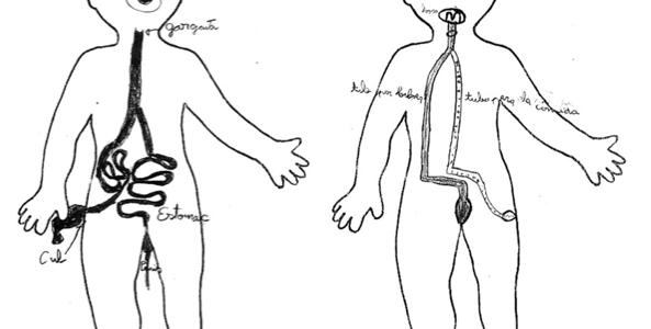 Els éssers vius intercanvien matèria i energia i modifiquen el medi(funció de nutrició)