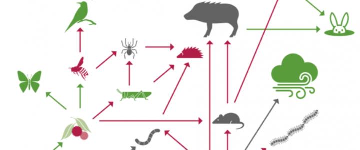 L'ecosistema, un escenari interactiu on succeeix l'evolució biològica